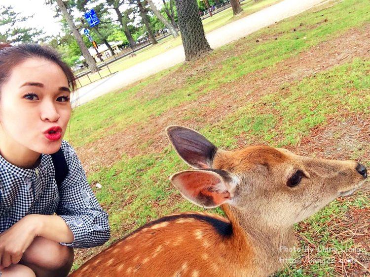 【大阪單身遊】奈良半日遊+餵鹿趣、吃一蘭拉麵、逛心齋橋筋‧Day3